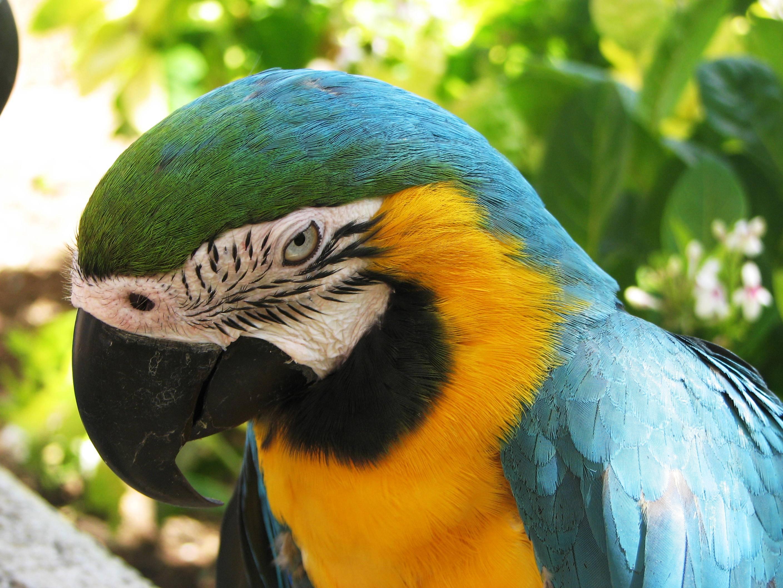 Macaw Waikiki